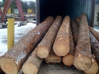 Pine Logs