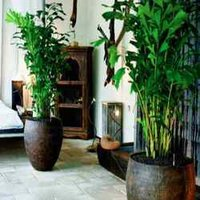 Indoor Plants Services