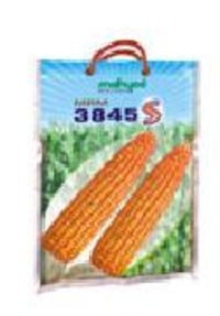 Hybrid Maize Mrm 3845 S Seeds