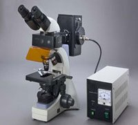 Trinocular Fluorescence Microscope With Digital Ca