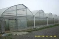 Multi-Span Greenhouse Sheets