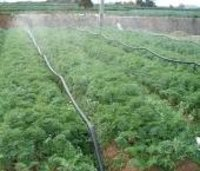 Irrigation System