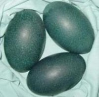 Emu Eggs