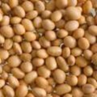 Soybean Seed