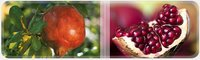 Polyphenols From Pomegranate