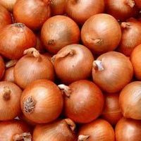 Ballari Onion