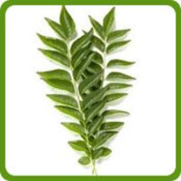 Dry Curry Leaves (Curry Patta)