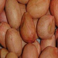 Peanut HPS