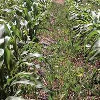 Weedicides Agrochemical