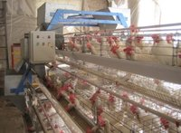 Battery Cages For Poultry