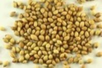 Coriander Seed