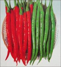 Chilli Seeds (No 585)