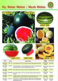 Hybrid Watermelon And Muskmelon Seed