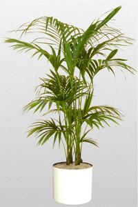 Indoor Plants For Office On Rent