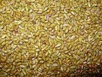 Cassia Torea Seed
