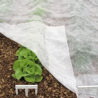 Agricultural Crop Cover of PP Non Woven Fabric