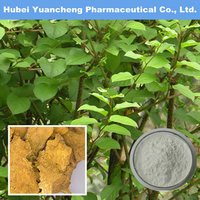 Polygonum Cuspidatum Extract