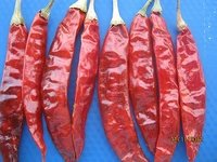Dry Red Chillies (S4)