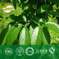 Eucommia Leaf Extracts