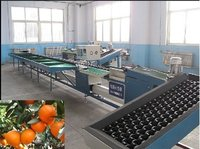 Fruits Sorting Machine