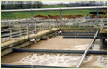 Water & Waste Water Treatment Plant