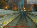 Pullets Cage