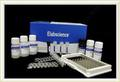 Mouse Btc (Beta Cellulin) Elisa Kit