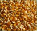 Yellow Corn Grade