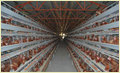 Egg Layer Chicken Battery Cage