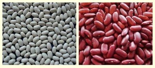 White Kidney Bean