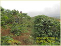Super Grow Water Soluble Fertilizer Cum Plant Growth Regulator