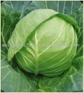 Fresh Indian Green Cabbages