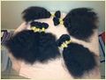 Real 100% Unprocessed Virgin Human Hair
