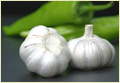 Chinese White Garlic