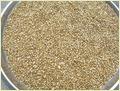 Green Millet (Bajra)