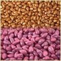 Seeds Coating Polymer