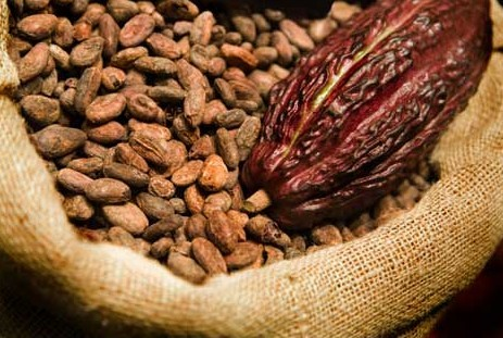 Indian Cocoa Beans
