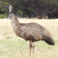 EMU & EMU Products