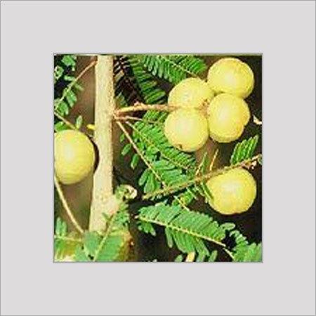 essay on medicinal plant amla