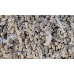 Cotton Seed in  Rabindra Sarani