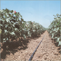Drip Irrigation Systems in  Shapar (Gondal Road)