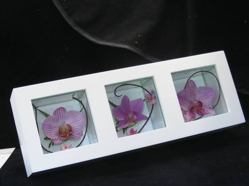 Preserved Orchid Flower