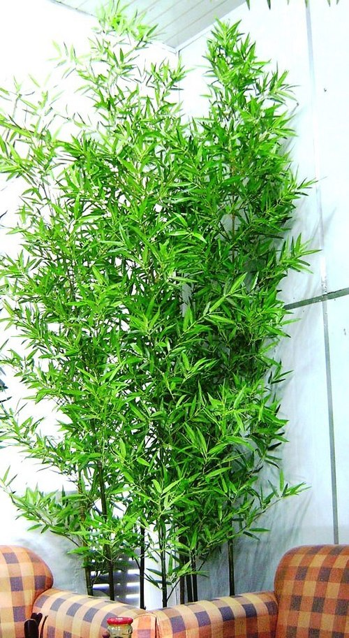 Artificial Plants Online India