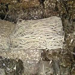 Monel Scrap in  Kathwada