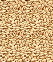Sesame Seeds in   Near Police Station