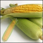 Natural Frozen Sweet Corn On Cob in  Wagholi