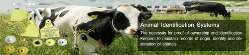 Animal Identification System