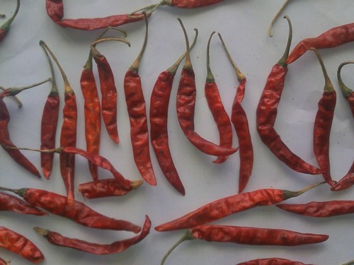 Dried Red Chilli in  Old Palasia