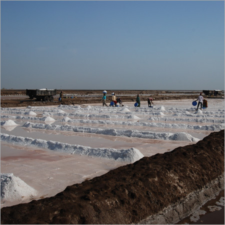 Industrial Raw Salt in   Ghogha Circle