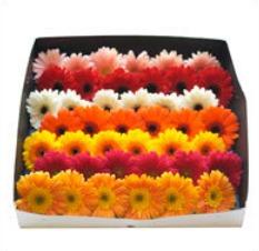 Decorative Gerbera Flowers